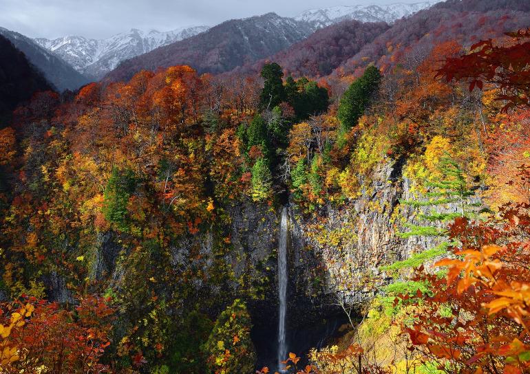 紅葉(画像提供:トヨタ白川郷自然學校)