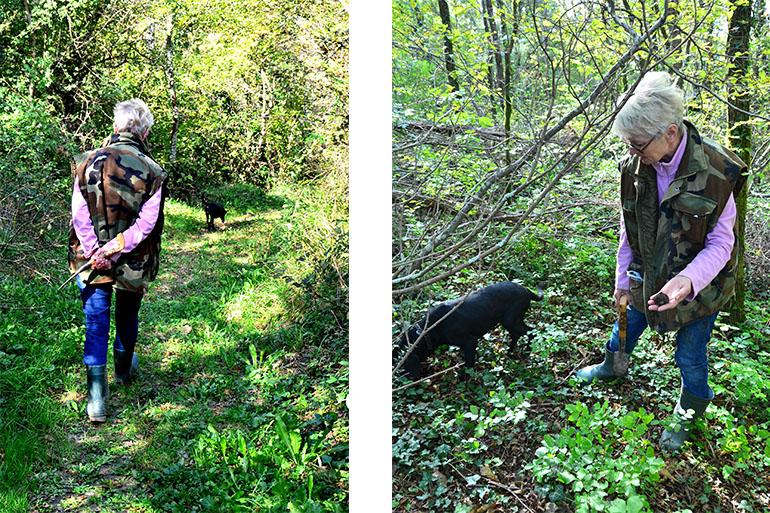 ここ掘れワンワン、トリュフ狩り クロアチア・ブゼト