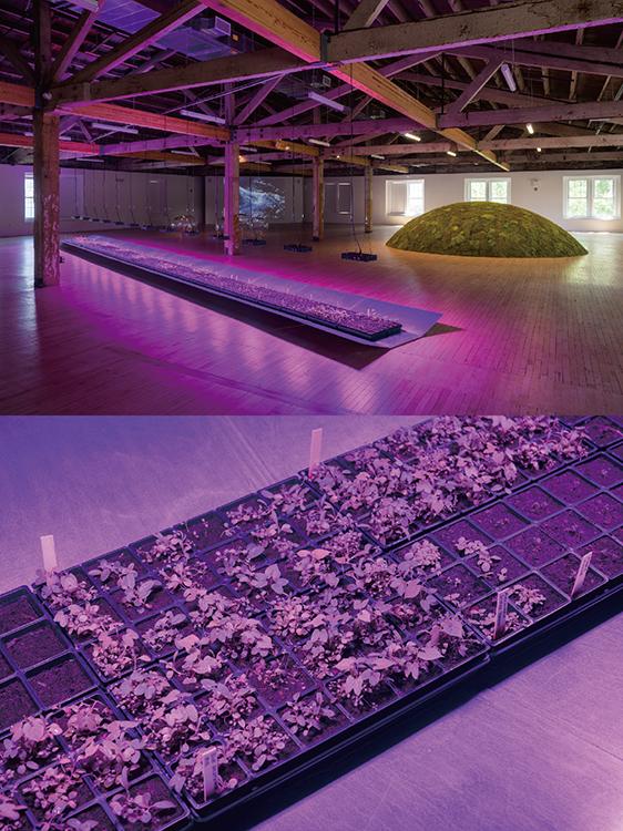 2階ギャラリーの写真。Meg WebsterのWave展の様子。映像や苔や植木、ガラスなどを素材にした彫刻作品を使ったインスタレーション。様々な要素があるが、一貫して言えるのは、どれも地球の自然環境を考えさせられる芸術作品だということだ。写真下の植木の苗は展示後に島内の温室に移されるそうだ。 (写真上)Growing Piece, Galvanized steel, peat, potting plants, plants, grow lights, 54ft x 3ft, 2021; Moss Mound, Peat Moss, earth, hay, plastic tarp 17ft x 4ft, 2021 (写真下)Growing Piece, Galvanized steel, peat, potting plants, plants, grow lights, 54ft x 3ft, 2021 両写真ともにPhotos by Ian Douglas, courtesy of Lower Manhattan Cultural Council