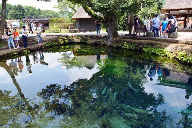 鏡のように水上を映し出す湧池