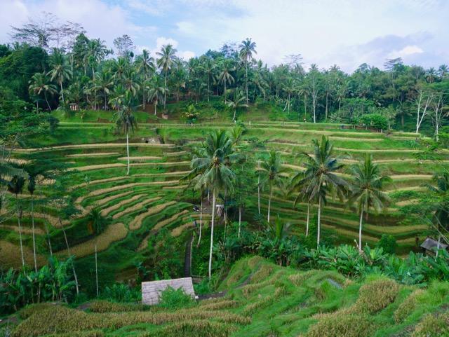 いま再び訪れたい「神々の住む島」へ バリ島(1)