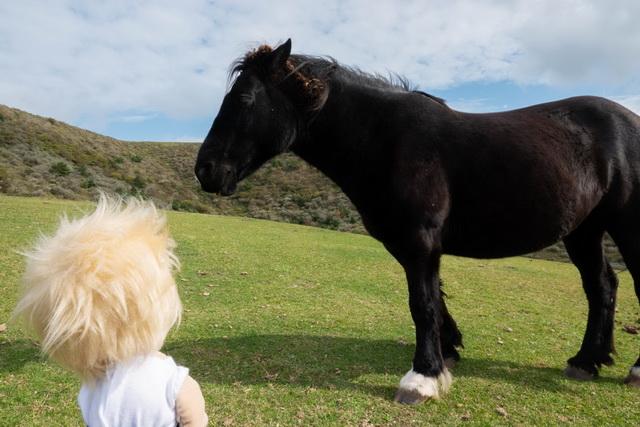 馬も近くで見られる