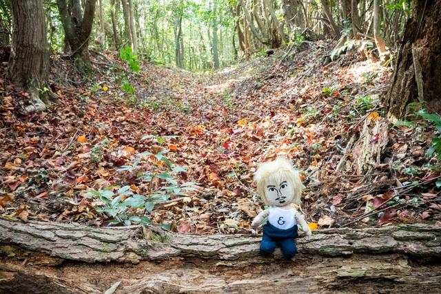 森林の中をひたすら歩いて