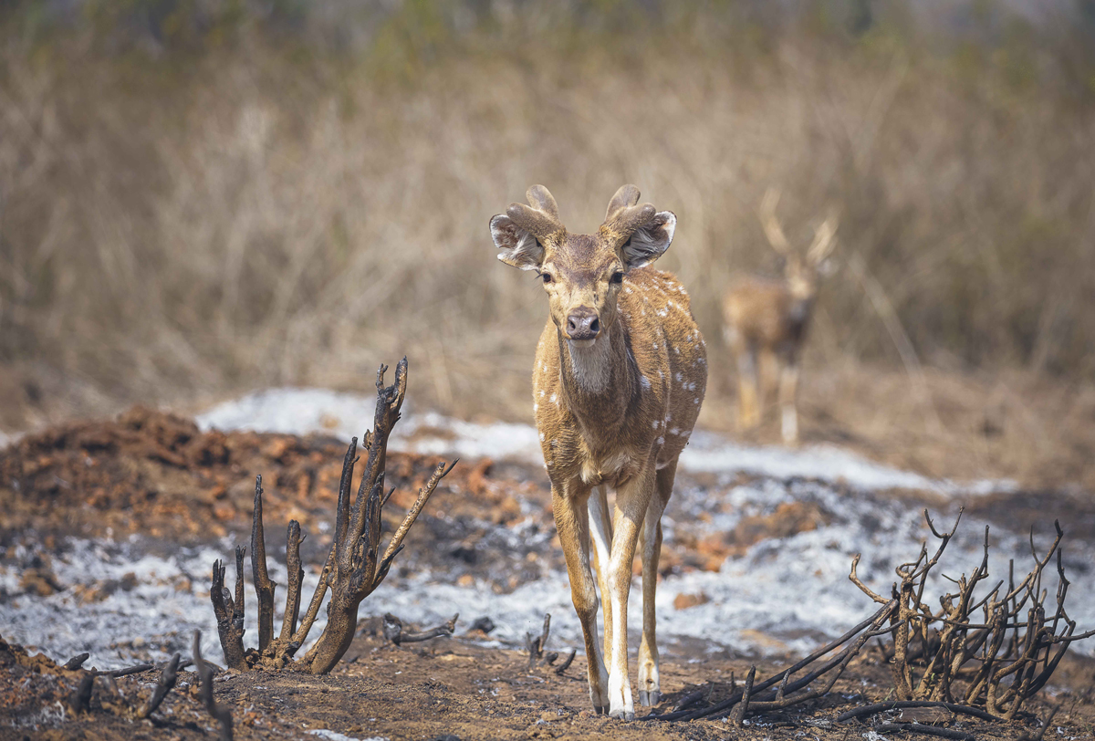 野生動物に遭遇する、インドの大自然