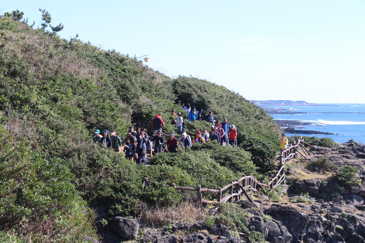 海・火山・森 済州島の自然を楽しみ尽くすオルレトレッキング