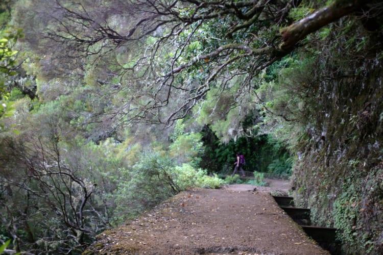 C・ロナウドの故郷・マデイラ島でトレッキング 絶景巡り