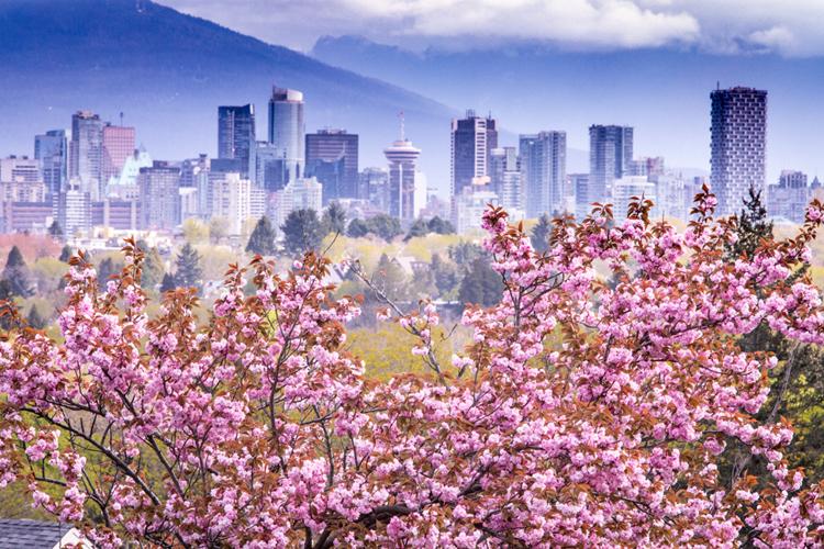 桜の樹氷が楽しめる 旅行のプロに聞く、2020年絶対行きたい!カナダ