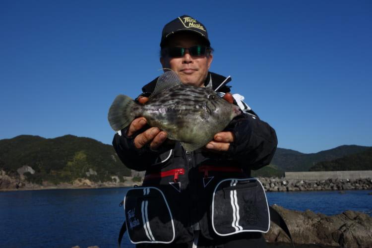 刺し身に、鍋に 冬の離れ磯で底物とカワハギ狙い 徳島県美波町