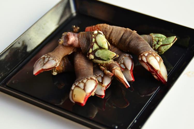 これ、「亀の手」ですか? マドリードのサンミゲル市場で珍味発見