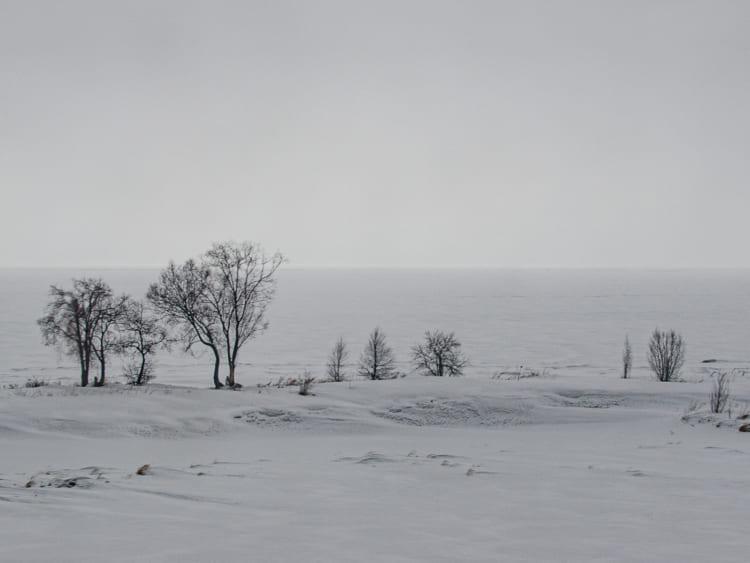 冬ざれた風景