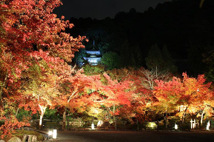 光と紅葉に魅せられる、ライトアップが秀逸な京都の紅葉スポット