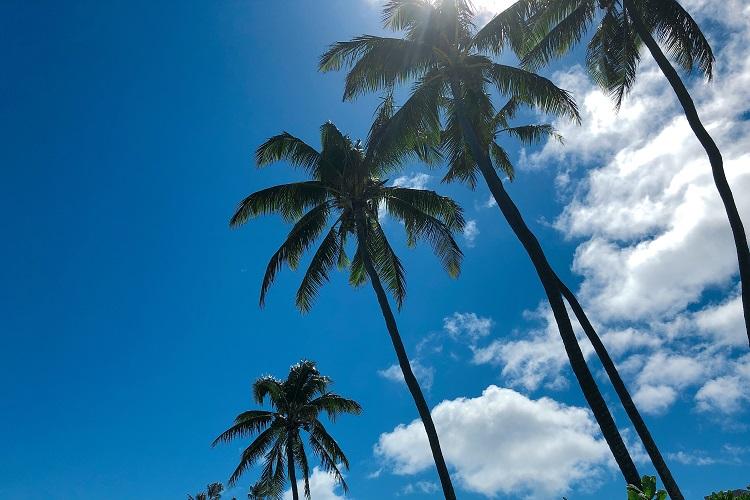 ハワイで自分へのご褒美旅 宇賀なつみがつづる旅(9)
