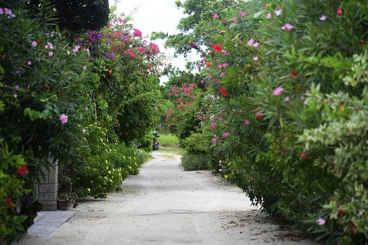 花が揺れる道