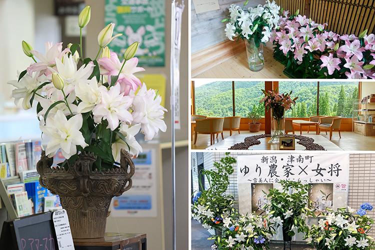ユリ農家と旅館の女将、withコロナの誘客でコラボ 「雪美人」の新潟県津南町