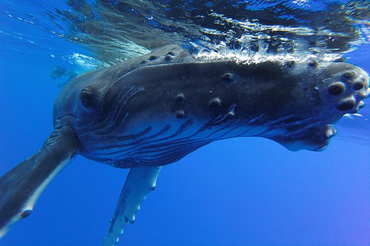 切り立つ山並みやクジラと泳げる海 知られざるタヒチ島の大自然