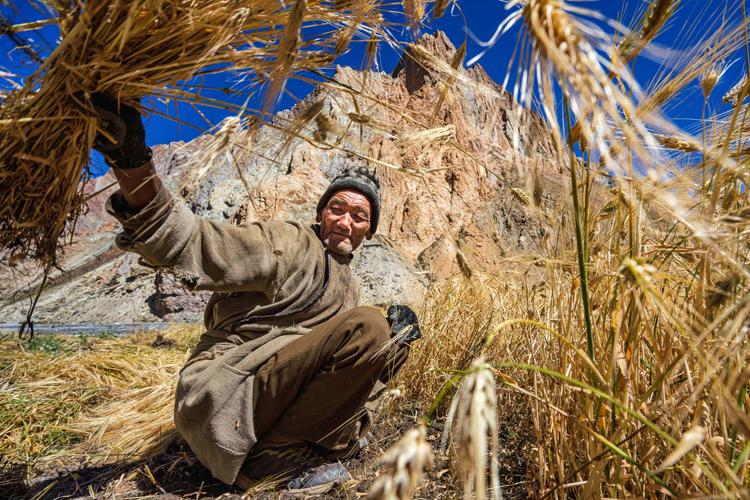 インド北部の辺境・ラダック地方 マイナス20度の冬の楽しみ方<10>