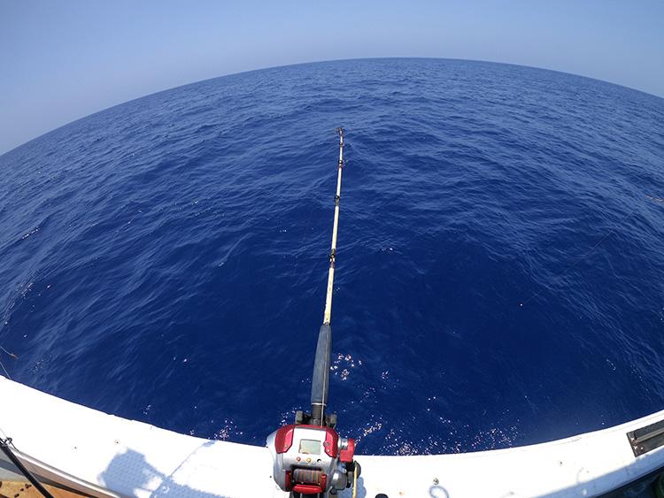 クジラもイルカもすぐそこに 船からダイブのお見送り 小笠原諸島