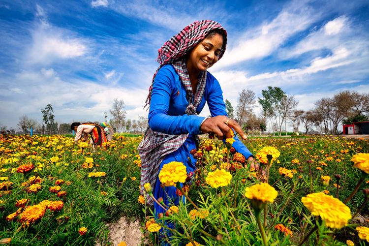 花がキロ単位で売られるインド ごく当たり前な日常の風景