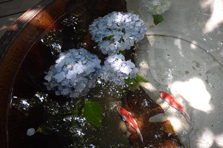 そびえたつ大船観音 明月院ブルーが映える北鎌倉