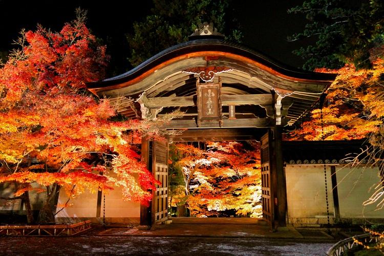 紅葉を前に奮闘し、息をのんだ京都の旅 宇賀なつみがつづる旅(15)