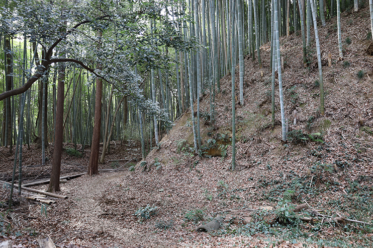 山城ビギナーにもおすすめ! 東京の名城・滝山城