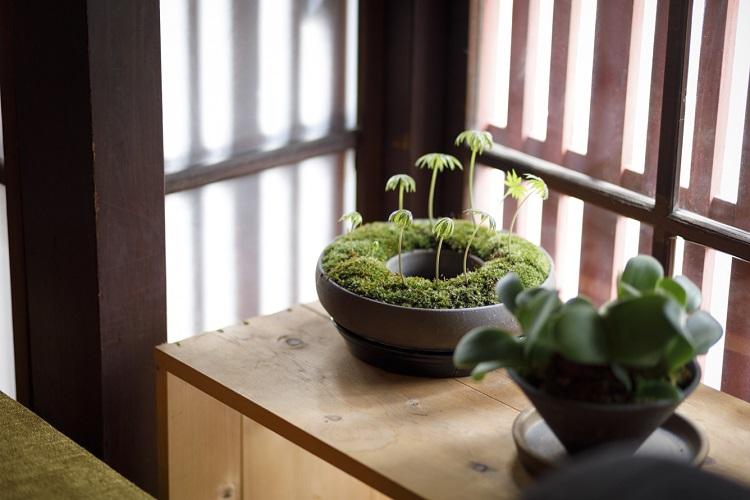 「多肉植物やコケ・シダ植物が好き」というダイモンさん。空間の各所に緑が置かれている