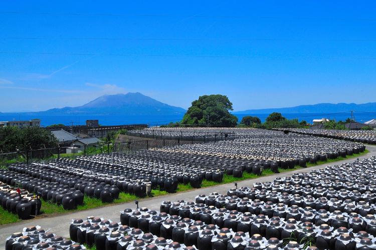 レストラン「壺畑」から望む桜島(画像提供:坂元醸造)