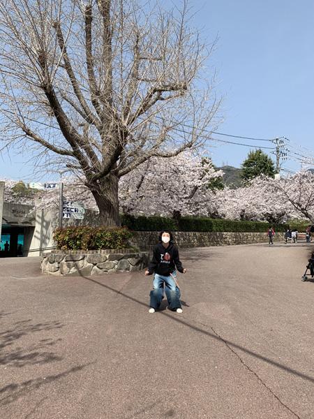 私がコアラ? モデル・はな、神戸で動物にキュン