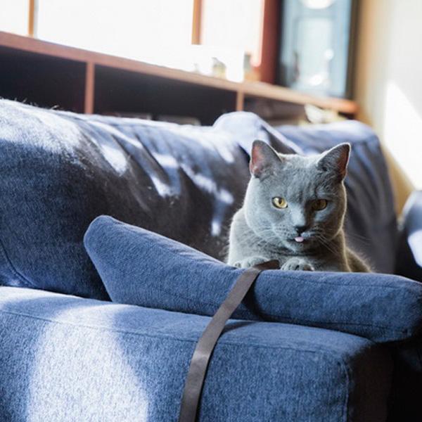 猫と暮らすインテリア(6)グリ&渡仲邸