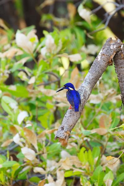 <4>大自然の美術館、カカドゥ国立公園