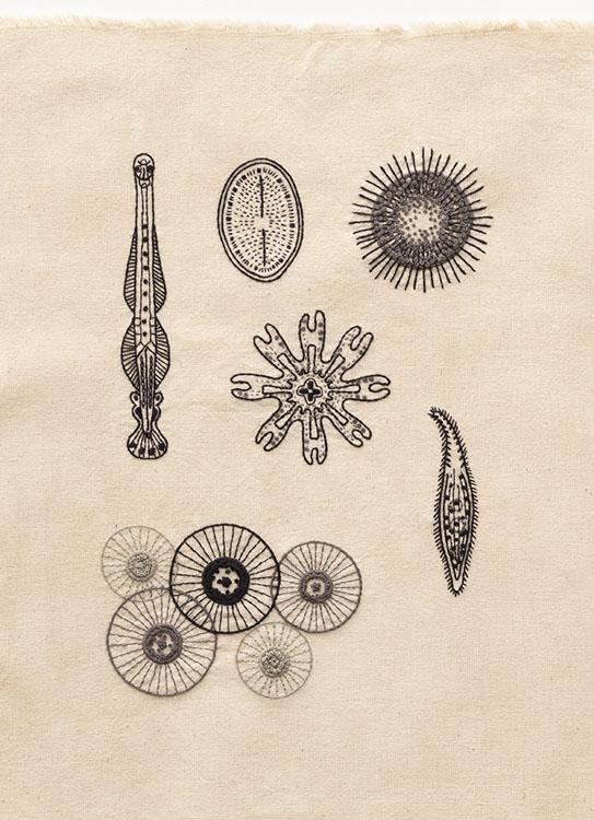 糸で描く植物、昆虫、きのこ、鉱物……。『刺繡博物図』