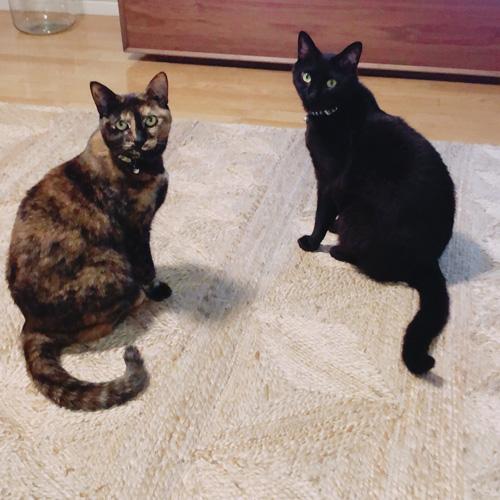 2匹で猫会議を開く。 byスーとノア(飼い主・岸山沙代子さん)