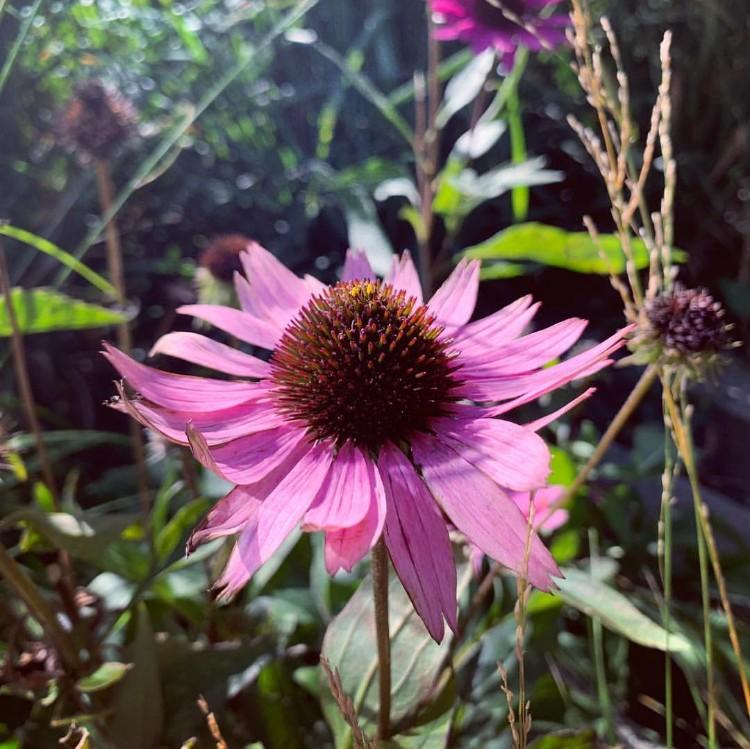 ハイラインにはさまざまな花が咲いていた