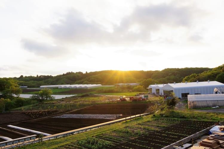 小林武史さんが代表を務めるサステナブルなライフスタイルを提案するプロジェクト「KURKKU」が運営する千葉・木更津の農場。これまで有機野菜の生産と養鶏を手がけてきたが、年内にはレストランやアートの展示場などを備える複合施設「kurkku fields」をオープンする予定/(c)kurkku fields