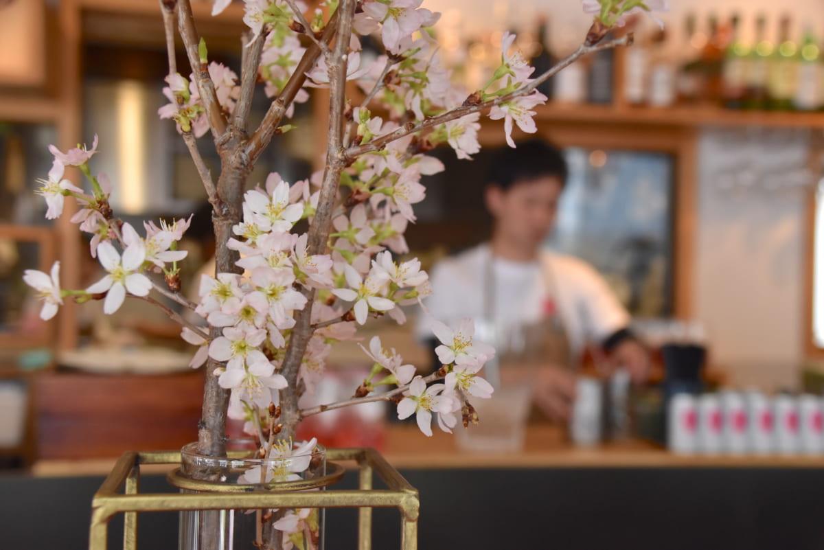 室内にいながらのお花見体験。インドア花見ができる期間限定カフェがオープン