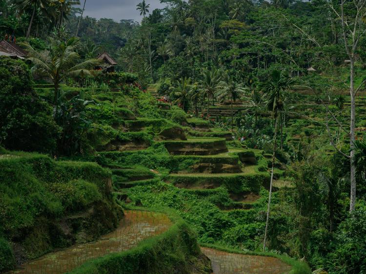 インドネシアのウブト
