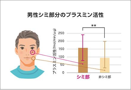 男性シミ部分のプラスミン活性