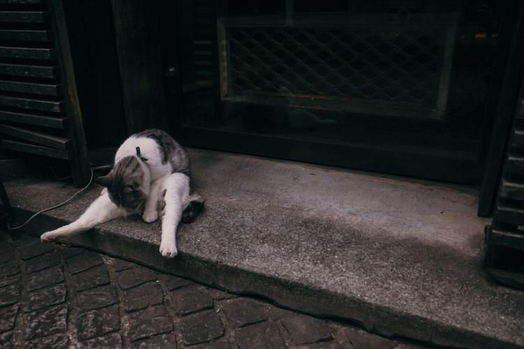 見つけたら絶対撮りたくなるネコと、夕方のスナップ撮影のコツをプロに学ぼう
