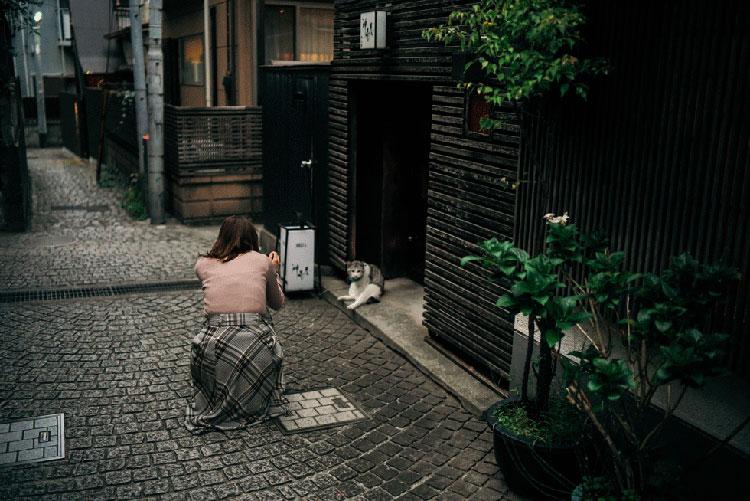 花柳さんとネコ