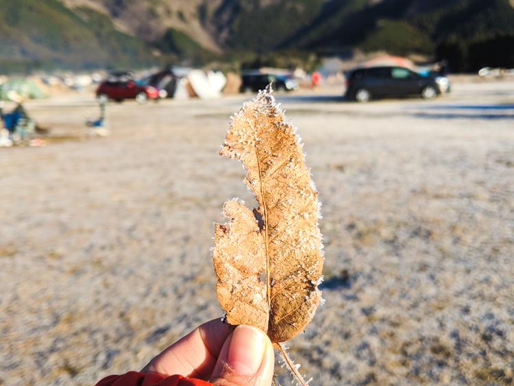 凍る落ち葉