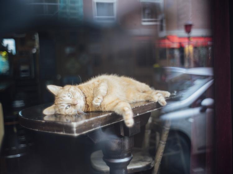 失われた日常を悲しむのではなく「今ある環境でどう生きるか」 写真家・三浦咲恵