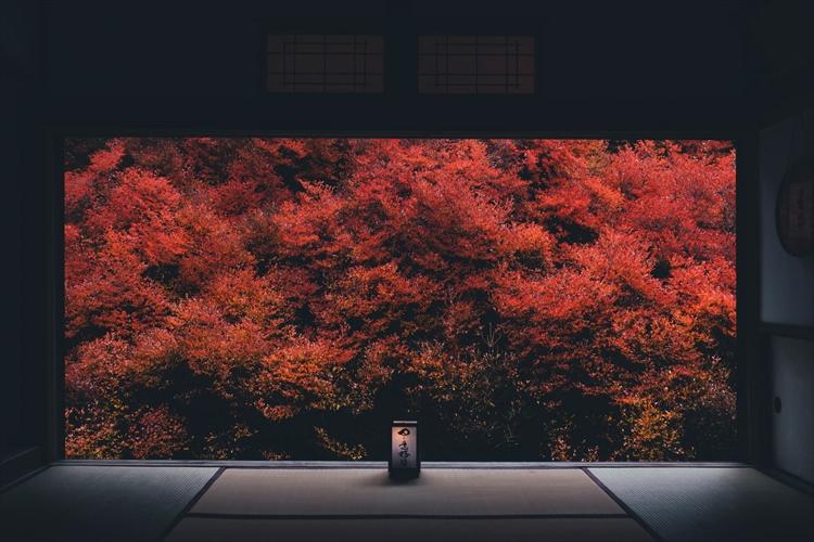 【フォトギャラリー】旅に出られなくなった風景写真家が考えたこと 写真家・保井崇志
