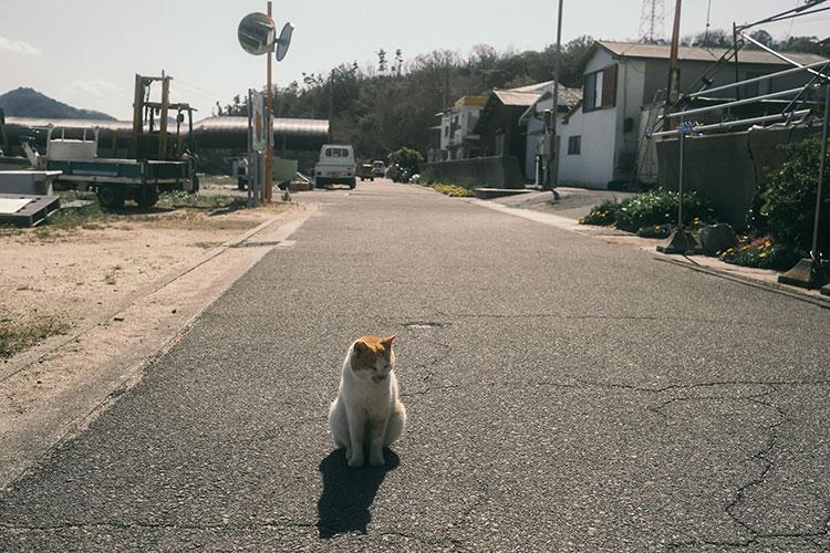 男木島にいた猫