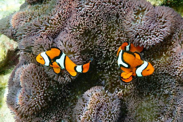 箱庭のようなリセナン島で南国を満喫 パプアニューギニア