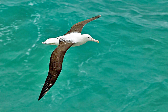 街の近くに絶滅危惧種のペンギンが ニュージーランドのダニーデン