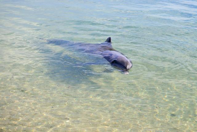 イルカがあいさつに来た! 西オーストラリアのモンキーマイアで興奮