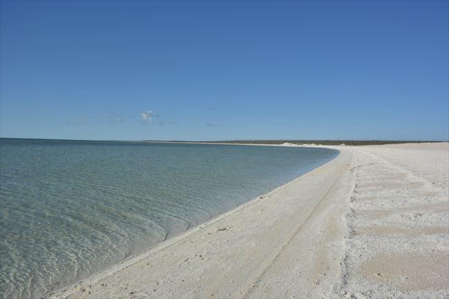 一見、普通の白砂ビーチに見えますが、実は、二枚貝で埋め尽くされています