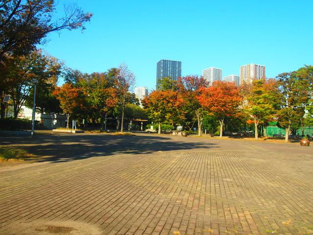 「元住吉」にある中原平和公園の景色。武蔵小杉方面を眺めると、紅葉が始まった木々と高層マンションが見える。広々として開放感のある公園だ