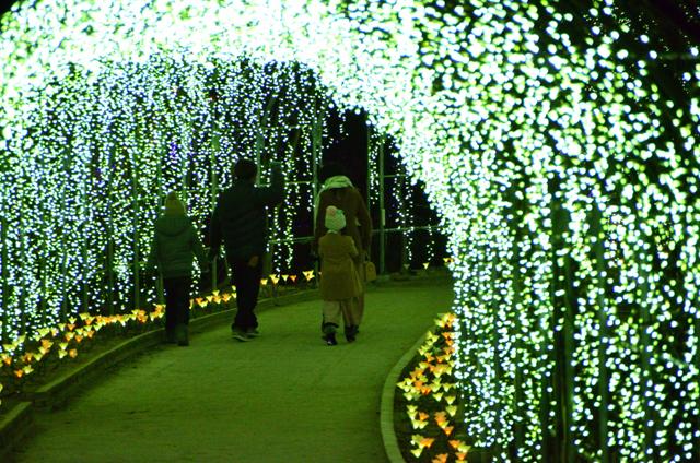 15万球の電飾で彩られたきばな藤のトンネル