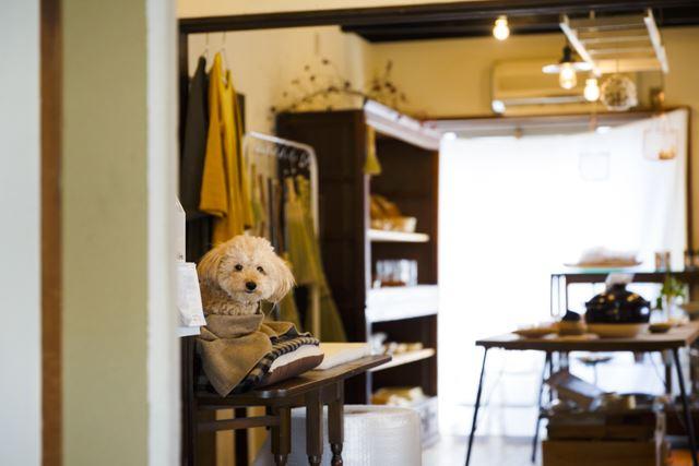 レジ横のクッションが愛犬・心ちゃんの定位置。平日はお店に連れてくることが多いそう。